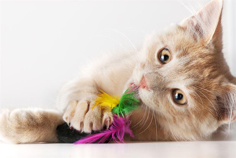 Zabawki dla kota - pomysły i inspiracje